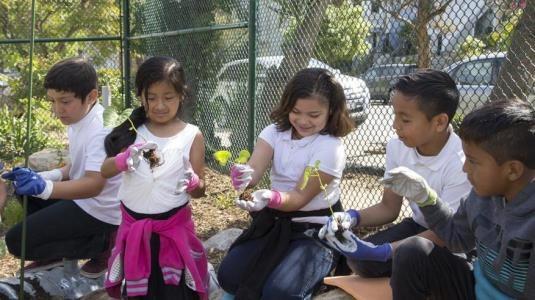 أطفال يحملون النباتات