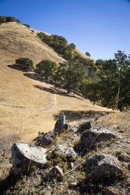 đồi và cỏ khô