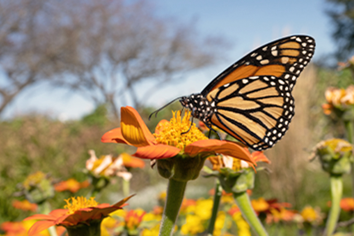 Желто-черная бабочка на цветке.